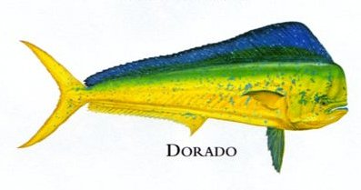 "Flick Ford Artist Handsigned Open Edition Giclee Print on Paper :""Dorado"""