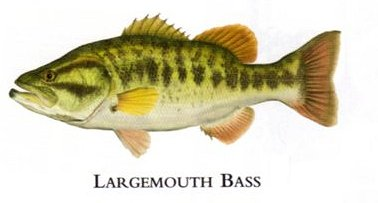 "Flick Ford Artist Handsigned Open Edition Giclee Print on Paper :""Largemouth Bass """