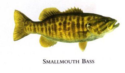 """Flick Ford Artist Handsigned Open Edition Giclee Print on Paper :""""Smallmouth Bass """""""