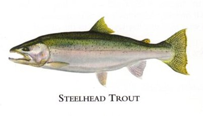 """Flick Ford Artist Handsigned Open Edition Giclee Print on Paper :""""Steelhead Trout """""""