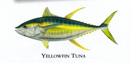 """Flick Ford Artist Handsigned Open Edition Giclee Print on Paper :""""Yellowfin Tuna """""""