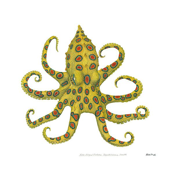 "Flick Ford Artist Signed and Numbered MasterWork™ Canvas Giclee:""Blue-Ringed Octopus"""