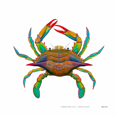 "Flick Ford Artist Signed and Numbered MasterWork™ Canvas Giclee:""Maryland Blue Crab"""