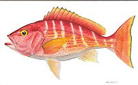 """Flick Ford Handsigned and Numbered Limited Edition Giclee on Canvas:""""Silk Snapper"""""""