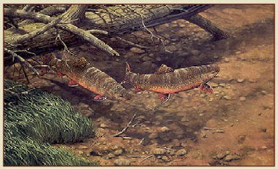 """Fred W.Thomas Handsigned & Numbered Limited Edition Print: """"Brush Pile Brookies"""""""