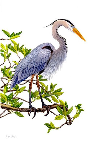 """Flick Ford Artist Signed and Numbered Limited Edition Canvas Giclee:""""Heron in Mangrove"""""""