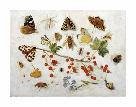 "Jan Van Kessel Fine Art Open Edition Giclée:""Butterflies, Moths and Other Insects"""