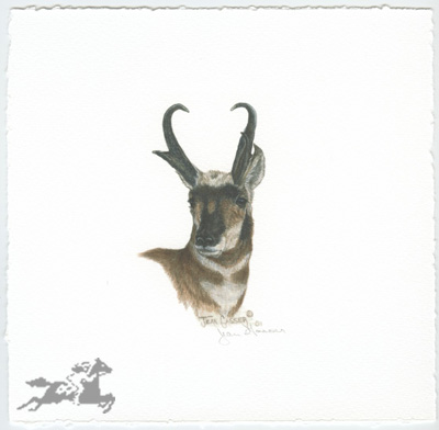"""Jean Gasser Giclee on Paper with Deckled Edges :""""ANTELOPE VIGNETTE"""""""