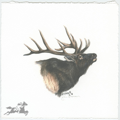"Jean Gasser Giclee on Paper with Deckled Edges :""ELK VIGNETTE"""