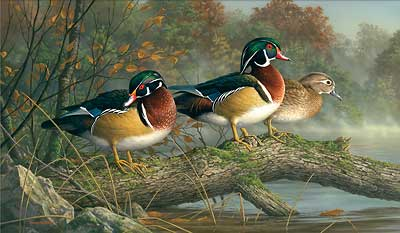 "Jim Hautman Handsigned and Numbered Limited Edition:""Secret Spot-Wood Ducks"""
