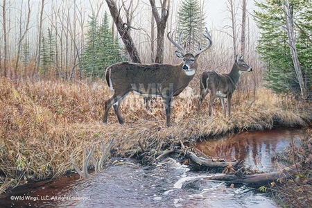 """Jim Kasper Hand Signed and Numbered Limited Edition Print:""""The Survivor – Whitetail Deer"""""""