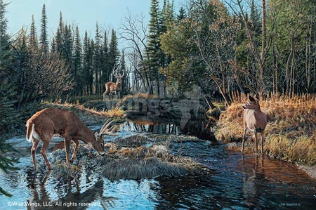 """Jim Kasper Handsigned and Numbered Limited Edition Print: """"Trespassing-Whitetail Deer"""""""