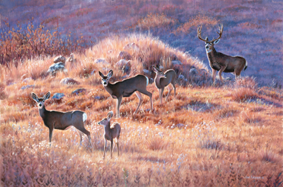 "Jim Kasper Limited Edition Artist Proof Print: ""Morning Trek - Mule Deer"""