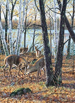 "Jim Kasper Limited Edition Print:""Season Wood-Confrontation """