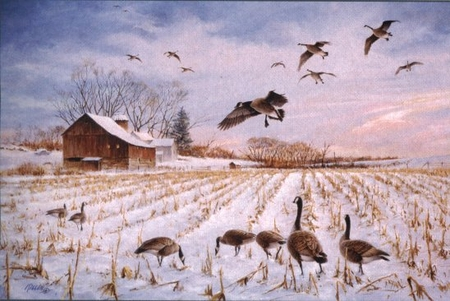 """Jim Killen Handsigned & Numbered Limited Edition Print:""""The Gathering - Canada Geese"""""""