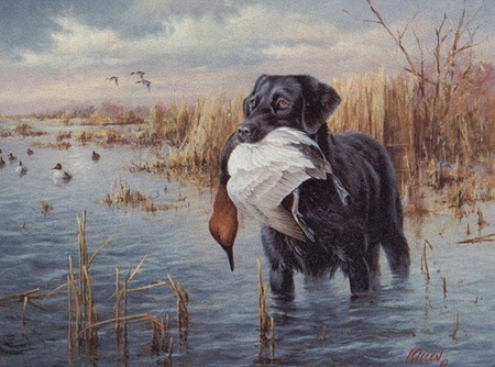 """Jim Killen Limited Edition Artist Proof Canvas:""""Dogs in Action - Black Lab"""""""