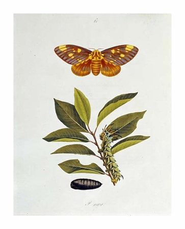 """John Abbot Fine Art Open Edition Giclée:""""The Natural History of the Rarer Lepidopterous Insects of Georgia 1794"""""""