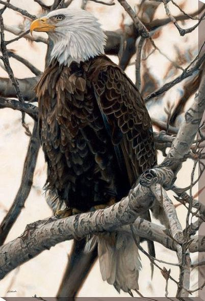 "John Aldrich Open Edition Wrapped Canvas:""The Sentinel - Bald Eagle"""