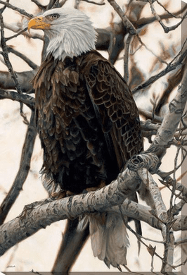 "John Aldrich Open Edition Wrapped Canvas:""The Sentinel – Bald Eagle"""
