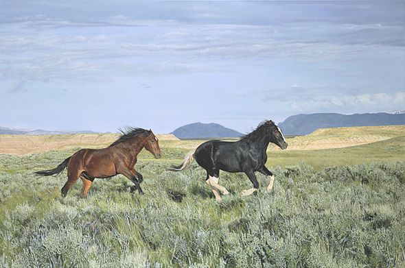 "John Bye Open Edition Canvas Giclee:""Wild and Free"""