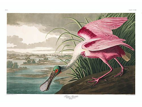 "John James Audubon Limited Centennial Edition Giclee on Paper:""Roseate Spoonbill"""