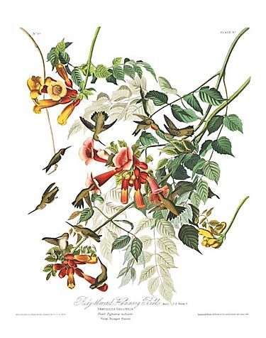 "John James Audubon Limited Centennial Edition Giclee on Paper:""Ruby-throated Hummingbird"""