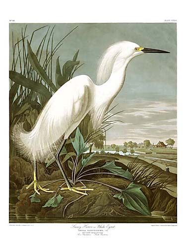 "John James Audubon Limited Centennial Edition Giclee on Paper:""Snowy Egret"""
