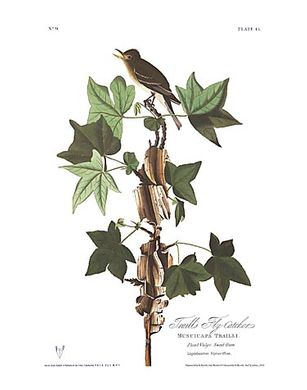 "John James Audubon Limited Centennial Edition Giclee on Paper:""Willow Flycatcher"""