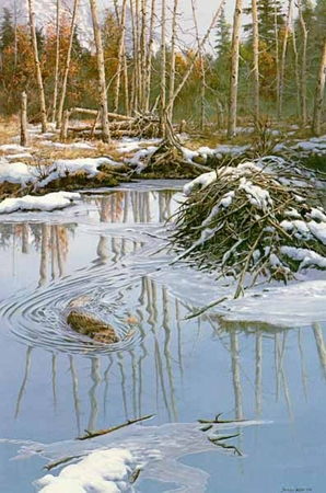 "John Seerey-Lester Limited Edition Print: ""Before The Freeze- Beaver"""