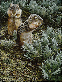 "John Seerey – Lester Limited Edition Print:""Morning Forage - Ground Squirrel"""