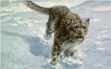 """John Seerey – Lester Limited Edition Print:""""The Chase-Snow Leopard"""""""