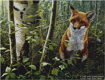 """John Seerey – Lester Limited Edition Print:""""The Young Explorer-Red Fox Kit"""""""