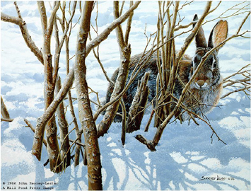 """John Seerey – Lester Limited Edition Print:""""Winter Hiding - Cottontail"""""""