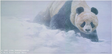 """John Seerey – Lester Limited Edition Print:""""Wolong Whiteout"""""""