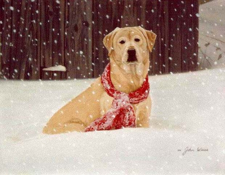 """John Weiss Limited Edition Print: """"Cold Nose Warm Heart"""""""