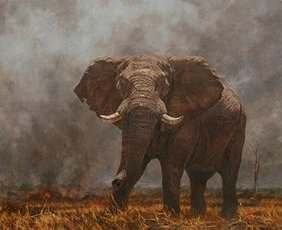 "Julia Rogers Hand Signed and Numbered Limited Edition Giclee on Canvas:""Bush Fire"""