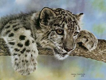 """Leslie Harrison Open Edition Print:""""Intrigued"""""""