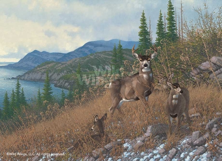 "M. Sieve Handsigned and Numbered Limited Edition Print: ""Kodiak Island – Blacktail Deer"""