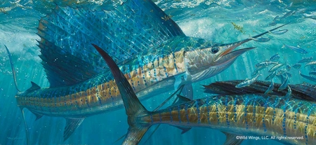 "Mark Susinno Hand Signed and Numbered Limited Edition Print:""Batting Cleanup – Sailfish"""