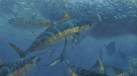 """Mark Susinno Handsigned & Numbered Limited Edition Print:""""Wrecking Crew - Yellowfin Tuna"""""""