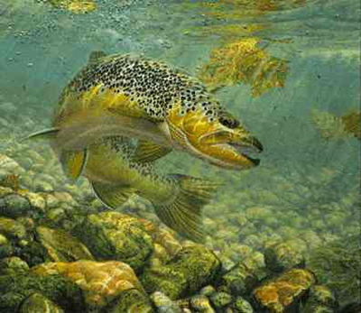 """Mark Susinno Limited Edition Artist Remarqed Print: """"Brown Trout - Duped"""""""