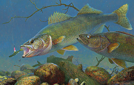"""Mark Susinno Limited Edition Print:""""Under the Ice - Walleyes """""""