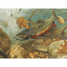 Brook Trout Framed Limited Edition Print by Mark A Susinno The Competitors