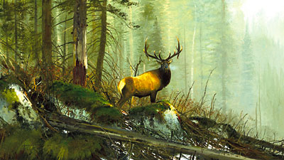 """Michael Coleman Hand Signed & Numbered Limited Edition Giclee on Paper:""""In the Bighorns - Elk"""""""