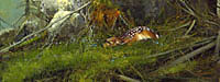 """Michael Coleman Handsigned & Numbered Giclee Limited Edition Print:""""Afternoon Nap"""""""