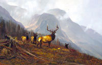 """Michael Coleman Handsigned & Numbered Giclee Limited Edition Print:""""In The Bookcliffs-Elk"""""""