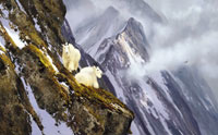 """Michael Coleman Handsigned & Numbered Giclee Limited Edition Print:""""In The Cliffs, Rocky Mountain Goats"""""""