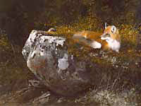 """Michael Coleman Handsigned & Numbered Giclee Limited Edition Print:""""Morning Sun, Red Fox"""""""