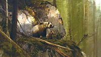 """Michael Coleman Handsigned & Numbered Giclee Limited Edition Print:""""No Contest-Grizzlies"""""""