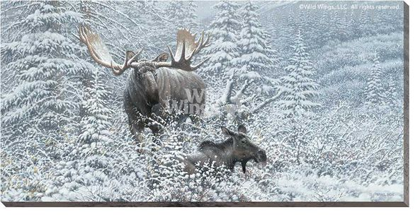 """Michael Sieve Gallery Wrapped Canvas Giclee:""""Patient Suitor - Moose"""""""